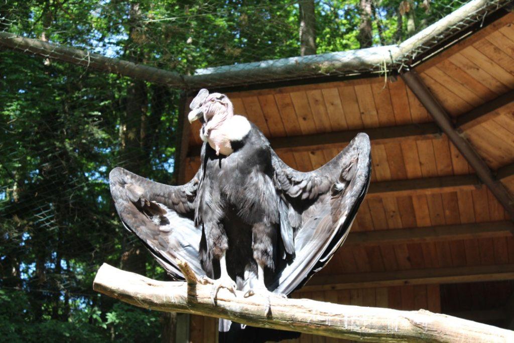 Tiergarten Nürnberg - Familienausflug - Harpie
