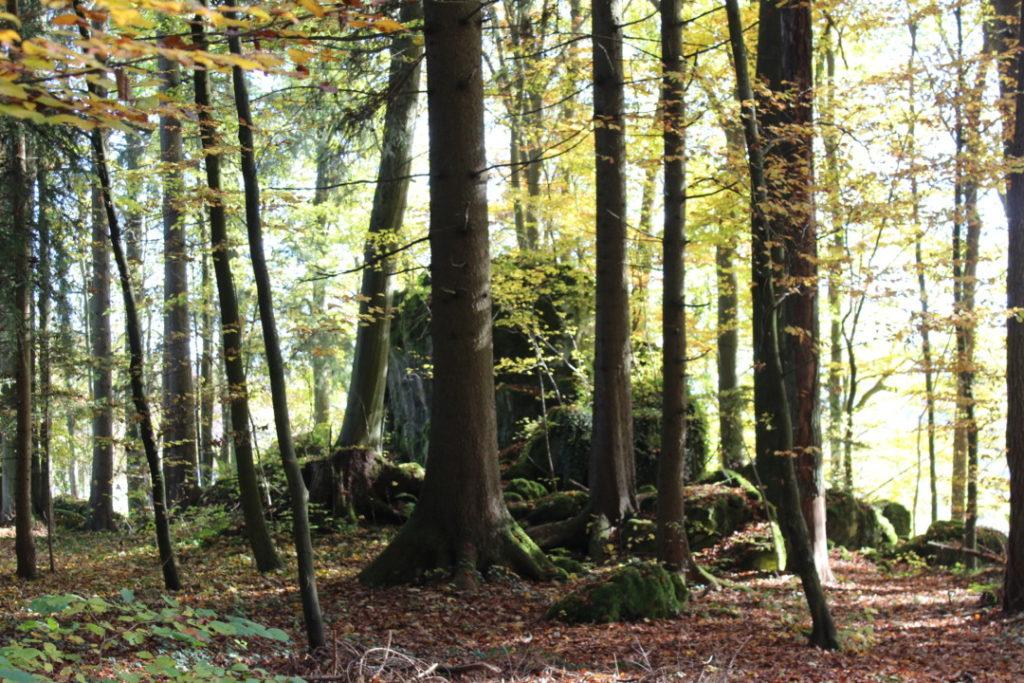 druidenhain-muggendorf-fraenkische-schweiz-familienausflug-12