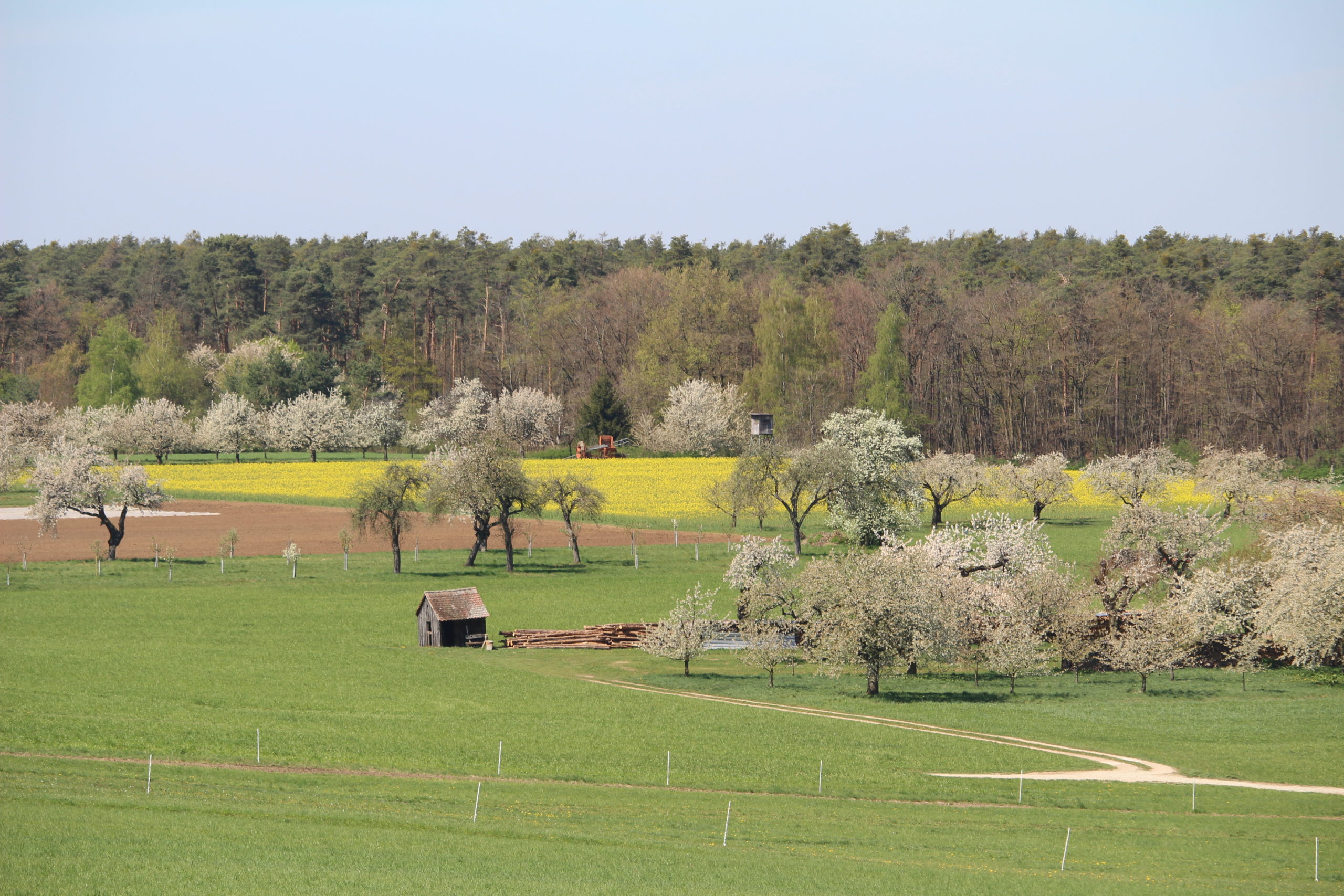 Kalchreuth Kirschblüten Kirschblütenweg Wanderweg