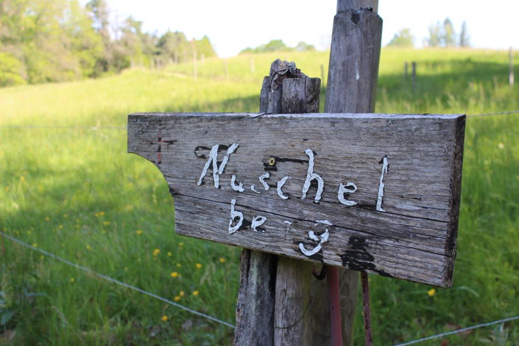 Wanderung von der Bitterbachschlucht bis nach Nuschelberg
