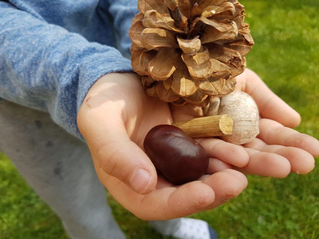 Naturmaterialien Kastanie Tannenzapfen Schneckenhaus