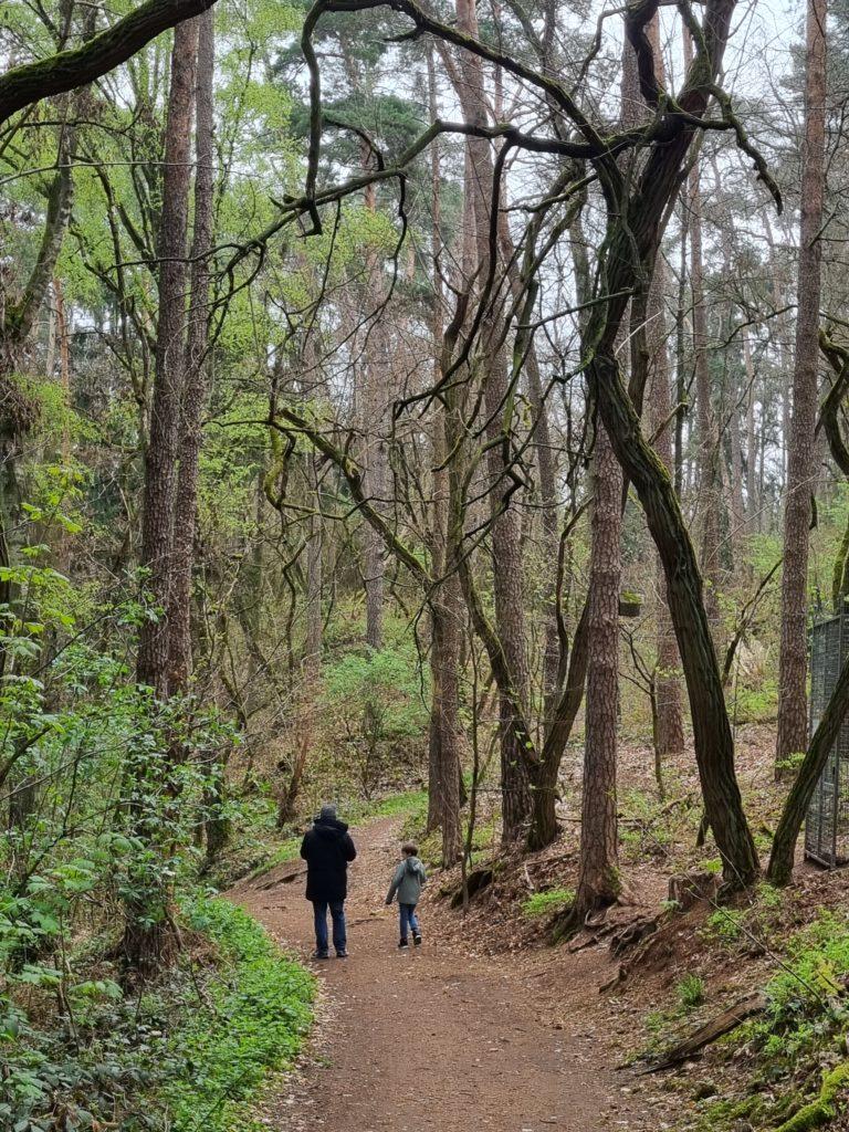 Wald Wild Erlebnispfad Im Further Stadtwald Kinderorte Franken